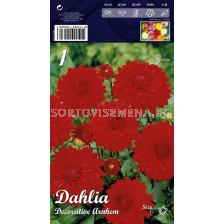 Далия (Dahlia) Decorative Arnhem (ниска)