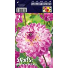 Далия (Dahlia) Decorative Christine