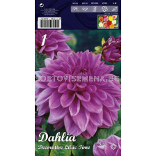 Далия (Dahlia) Decorative Lilac Time