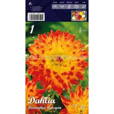 Далия (Dahlia) Decorative Procyon