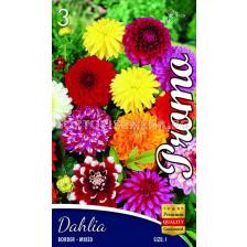 Далия (Dahlia) Border Mix - ниски
