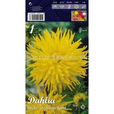 Далия (Dahlia) Cactus Kennemerland