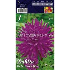 Далия (Dahlia) Cactus Purple Gem