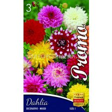 Далия (Dahlia) Decorativa Mix