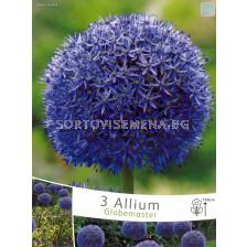 Декоративен лук (Allium Christophii) Globemaster