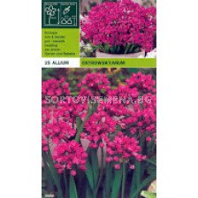 Декоративен лук (Allium Christophii) Ostrowskyanum