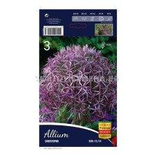 Декоративен Лук  Christophii - Allium Christophii