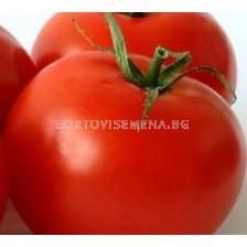 Сорт домати  AX 35-172 F1. Аграра ООД. Сортови семена Дар