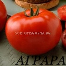 Сорт домати Амати F1. Аграра ООД. Сортови семена Дар