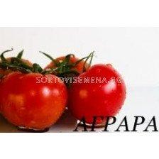 Сорт домати Буран F1. Аграра ООД. Сортови семена Дар