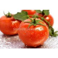 Сорт домати Гардел F1. Аграра ООД. Сортови семена Дар