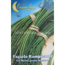 Семена фасул Зелен еднометров - beans Green one meter