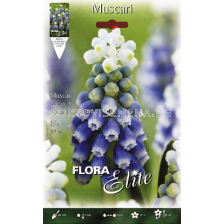 Мускари (Muscari) Touch of Snow - 1бр