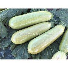 Семена тиквички ТИКВИЧКИ ПАСКАЛ F1 ( PASKAL F1 ) Фито- 250 сем