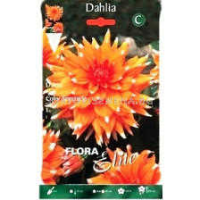 Далия (Dahlia) Cactus Color Spectacle
