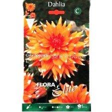 Далия (Dahlia) Cactus Color Spectacle