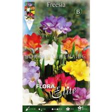 Фрезии (Freesia) микс 10 бр.
