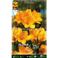 Фрезия Жълта (1 оп-10 луковици)