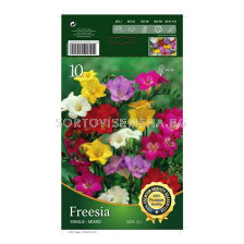 Фрезии Микс- 10 бр - Freesia Mix - 10 pieces