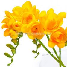 Фрезия Кичеста Жълта - Freesia yellow kichesta