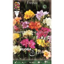 Фрезии (Freesia) Кичести (10 луковици)