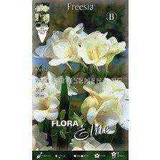 Фрезия Бяла (1 оп-10 луковици)
