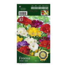 Фрезии Кичести Микс 1 оп (10 луковици) - Freesia Kichesti Mix 1 pack of 10 bulbs