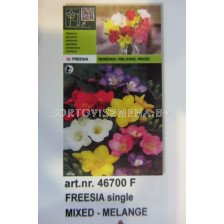 фрезии Микс LSH - 10бр - Freesia Mix LSH - 10 pieces