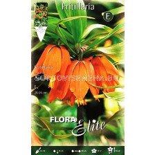 Фритилария - Fritillaria Imperialis Aurora