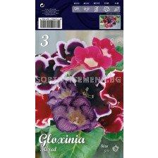 Глоксиния (пакет) 5+