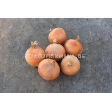 Семена за Лук Бракстън F1 ( Braxton F1 ) BJ -250 000 семена