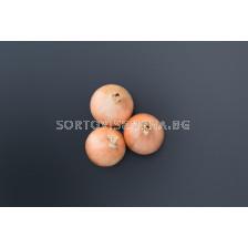 Семена за лук Онейда /Oneida F1/ BJ -250 000 семена