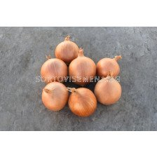 Семена за Лук Крокет F1 ( Crockett F1 ) BJ -250 000 семена