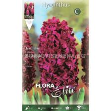 Зюмбюл (Hyacinth) Woodstock 14/15
