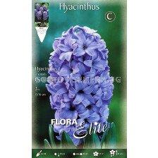 Зюмбюл (Hyacinth) Delft's Blue 14/15