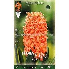 Зюмбюл (Hyacinth) Gipsy Queen 14/15