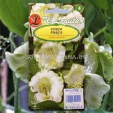 Кобея бяла / Cobaea scandens white / LG 1 оп