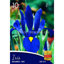 Ирис hollandica blue -  Iris hollandica blue