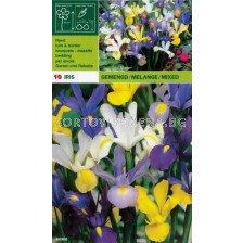Ирис - Iris Hоllandica (пакет - 10 луковици)
