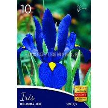 Ирис hollandica blue -  Iris hollandica blue