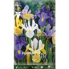 Ирис (Iris) Hollandica Микс 8/9