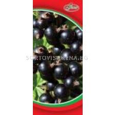 Касис - черно френско грозде (Флоров) - Black Currant (Florov)