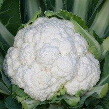карфиол Фуджияма F1 - cauliflower Fujiyama F1