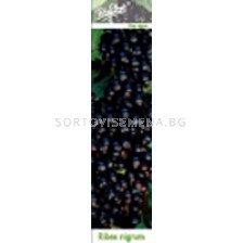 Касис черен - black currant