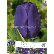 лале Blue - tulip Blue (пакет - 20 луковици)
