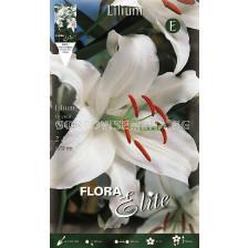 лилиум ориенталски Бял -  lilium oriental White