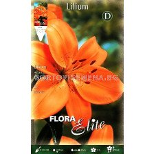 Лилиум (Lilium) Asiatic Orange 16/18