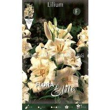 Лилиум (Lilium) Candidum