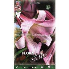 Лилиум Ориенталски (Lilium Oriental) Розов