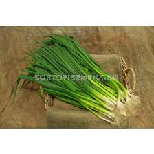 Семена лук за зелено Кошигая